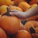 holiday season photo of a hand and a small pumpkin
